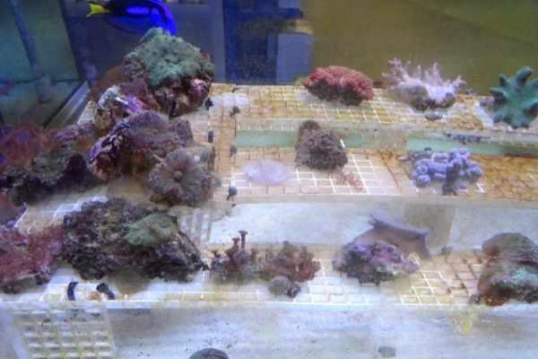 To frag coral, you don't need special water conditions