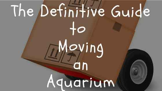 definitive guide to moving an aquarium
