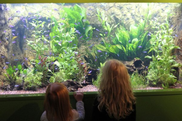 converting to a marine aquarium from freshwater
