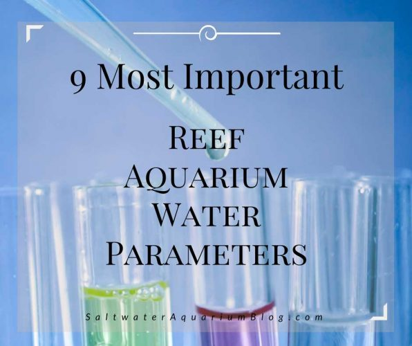 9 most important reef tank parameters