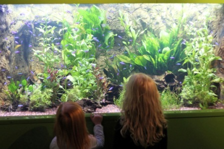 Converting To A Marine Aquarium From A Freshwater Tank