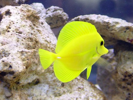 aggressive saltwater fish