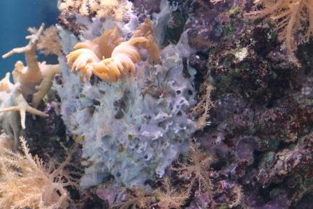cabbage leather coral and sponge