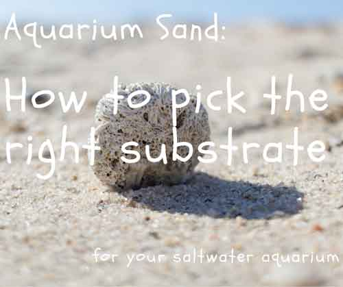 aquarium sand how to pick the right substrate for your saltwater aquarium
