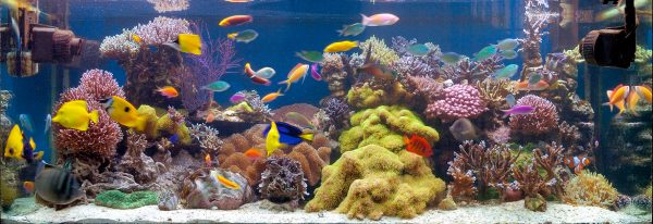 A clean tank as a result of a reef maintenance schedule