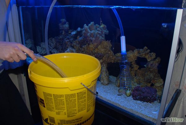 reef aquarium maintenance