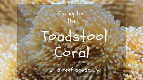 toadstool coral care guide cover image