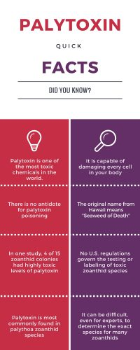 palytoxin quick facts info graphic