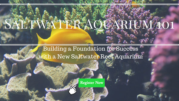 Saltwater Aquarium 101 course