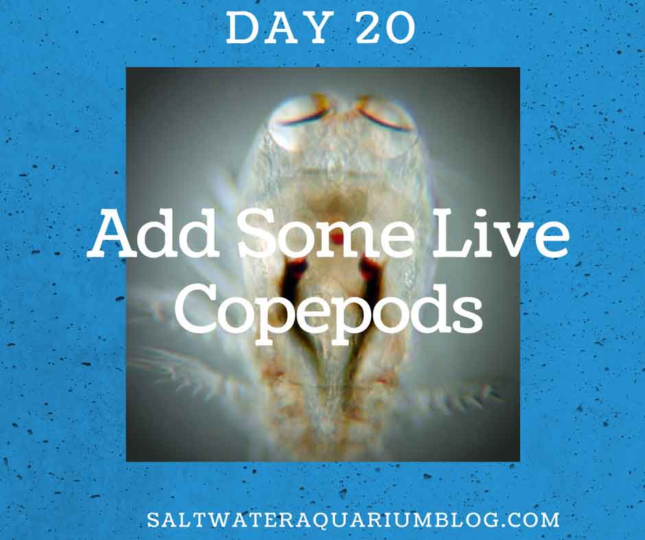 add some live copepods