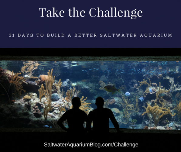 Build a Better Saltwater Aquarium