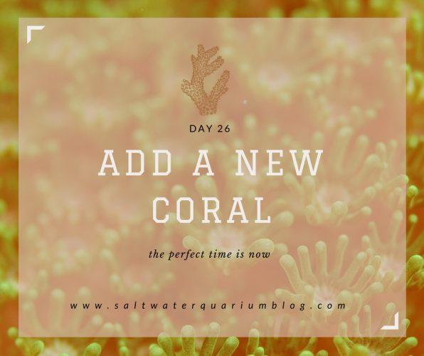 add a new coral