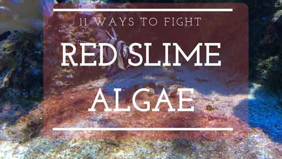 11 ways to fight red slime algae