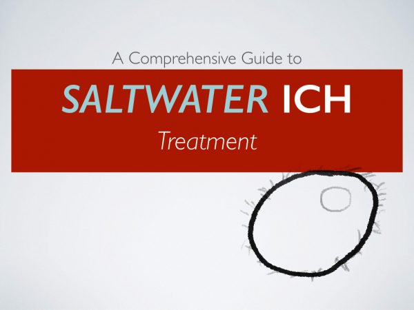 A comprehensive guide to saltwater ich treatment cover image