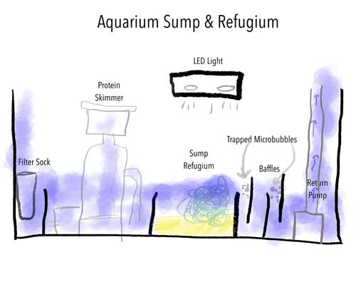 sketch that shows the key elements of an aquarium sump and refugium