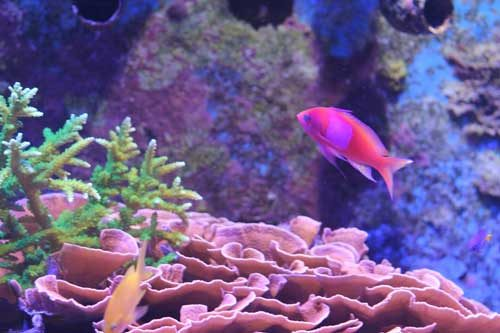 saltwater aquarium blog home page photo