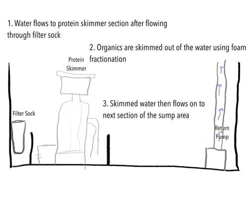 Protein skimmer placement and function in a reef aquarium sump tank