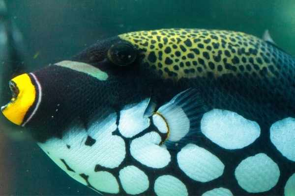 Aggressive saltwater fish have one or more types of aggression