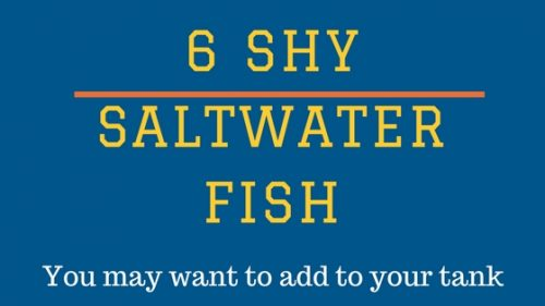 6 shy saltwater fish