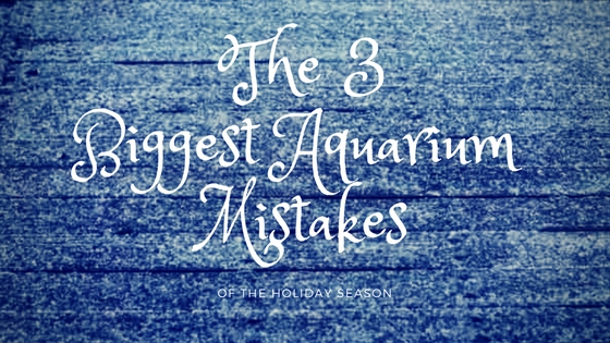 3 biggest aquarium mistakes