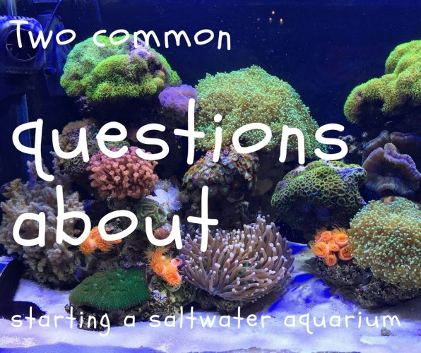 two common questions about starting a saltwater aquarium