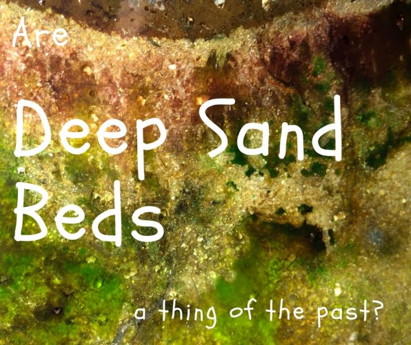 deep sand bed cover image