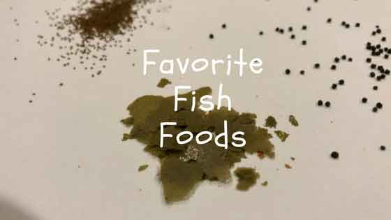 favorite fish foods 2