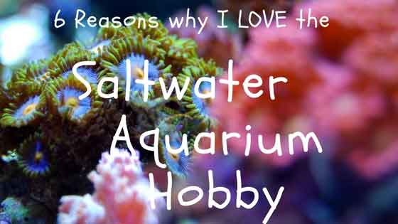 love the saltwater aquarium hobby
