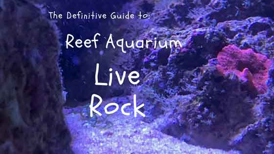 definitive guide to reef aquarium live rock