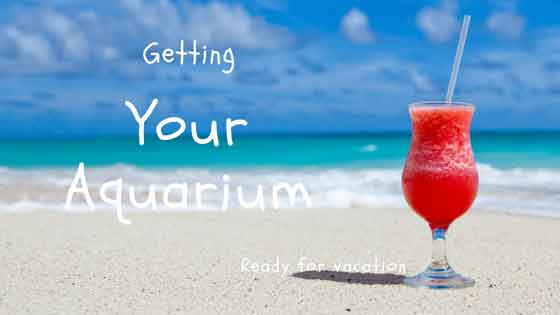 getting your aquarium ready for vacation