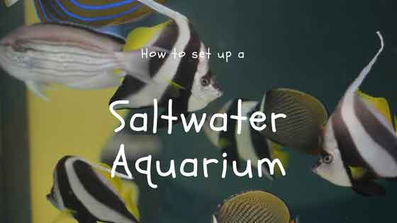 how to set up a saltwater aquarium