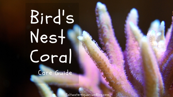 bird's nest coral care guide