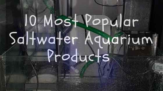 Top 10 most popular saltwater aquarium products