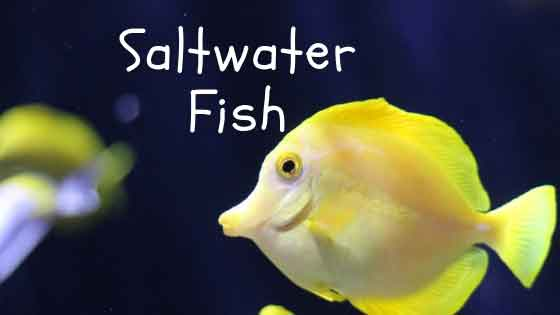 saltwater fish care guide