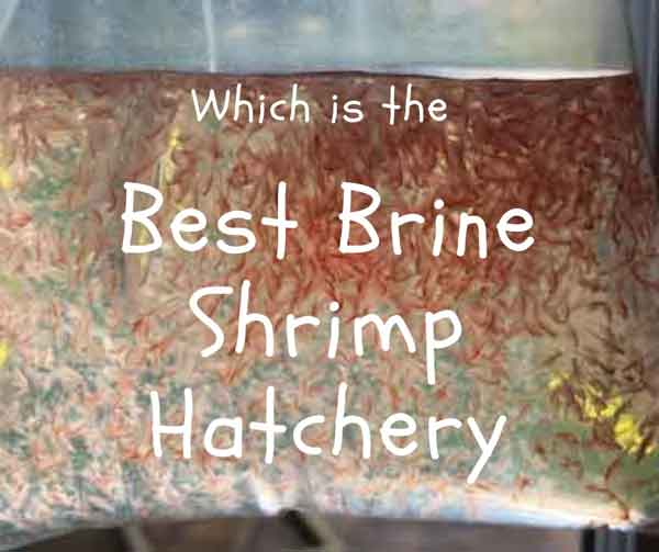 which is the best brine shrimp hatchery kit