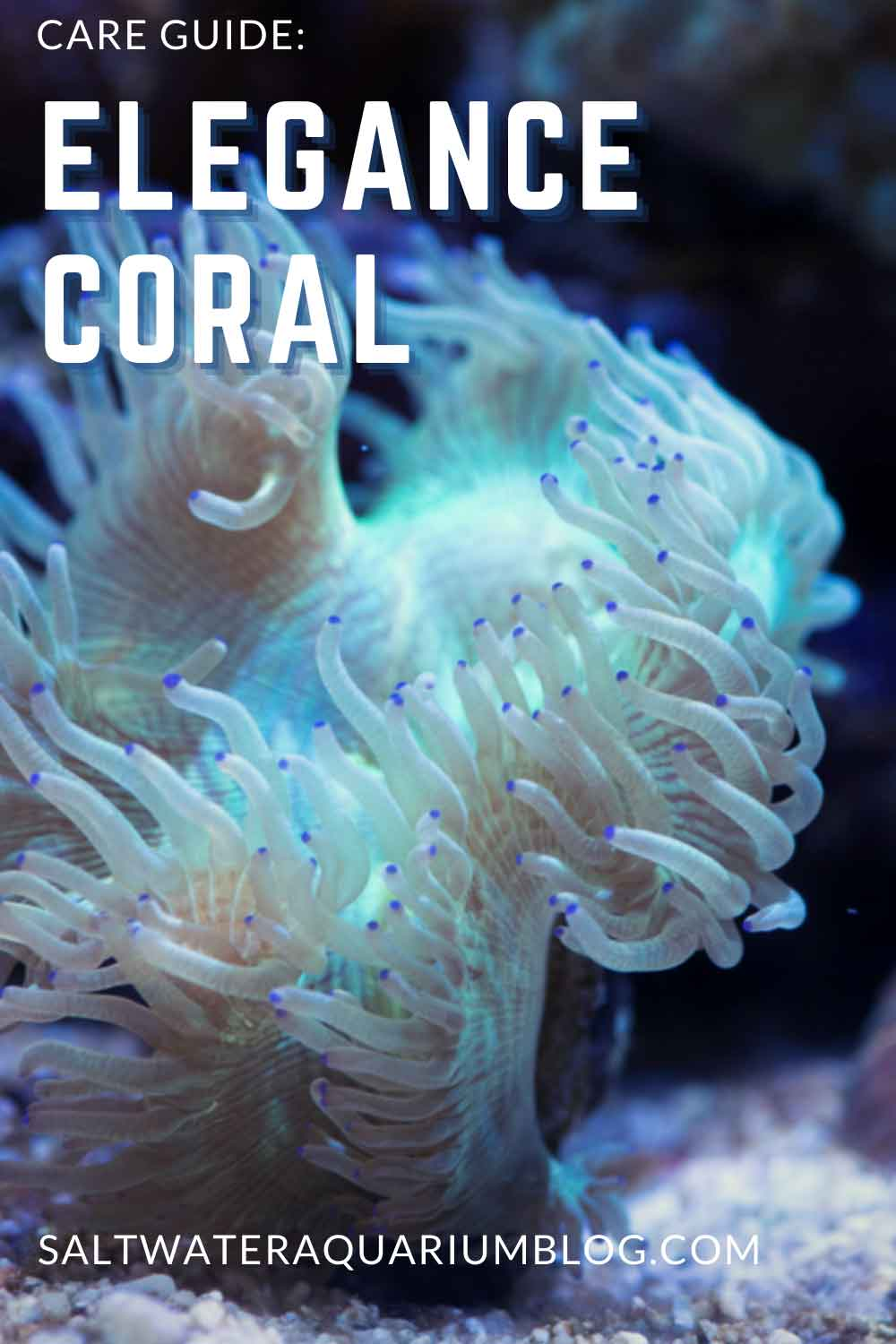 Elegance coral care guide