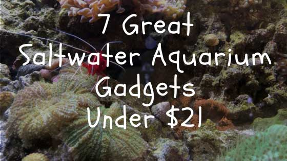 7 great saltwater aquarium gadgets under 21 dollars