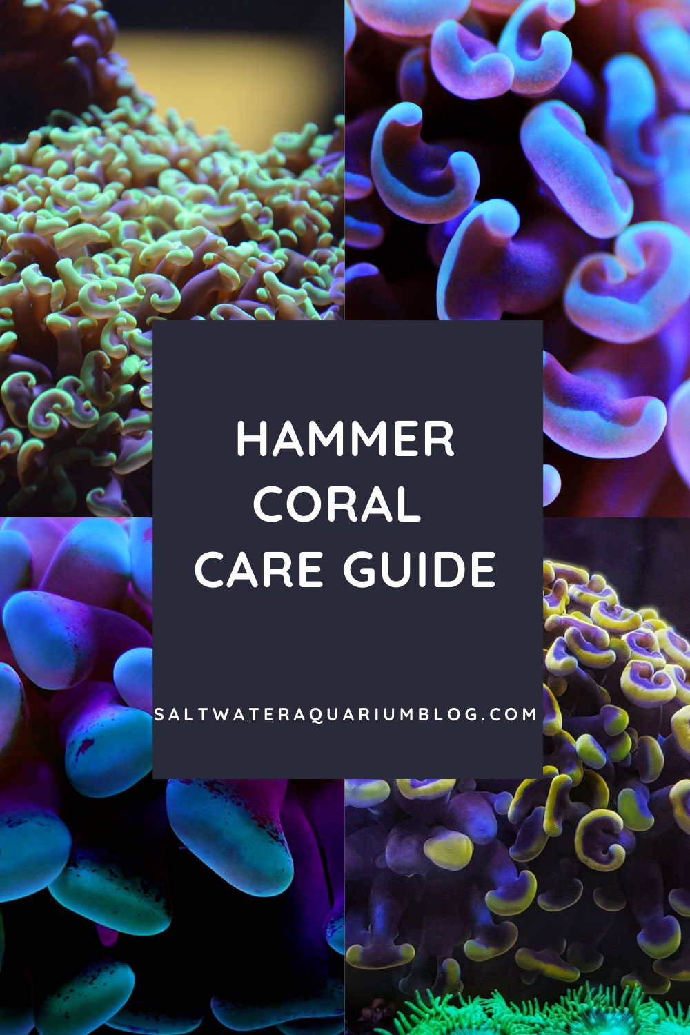 hammer coral post cover for pinterest