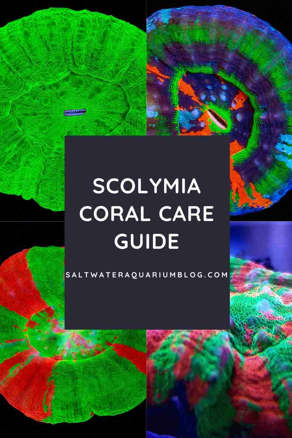 scoly coral