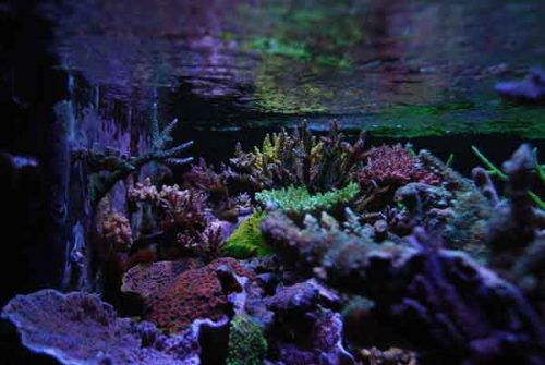 Saltwater aquarium blog build a better saltwater aquarium