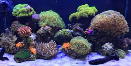 building a better saltwater aquarium