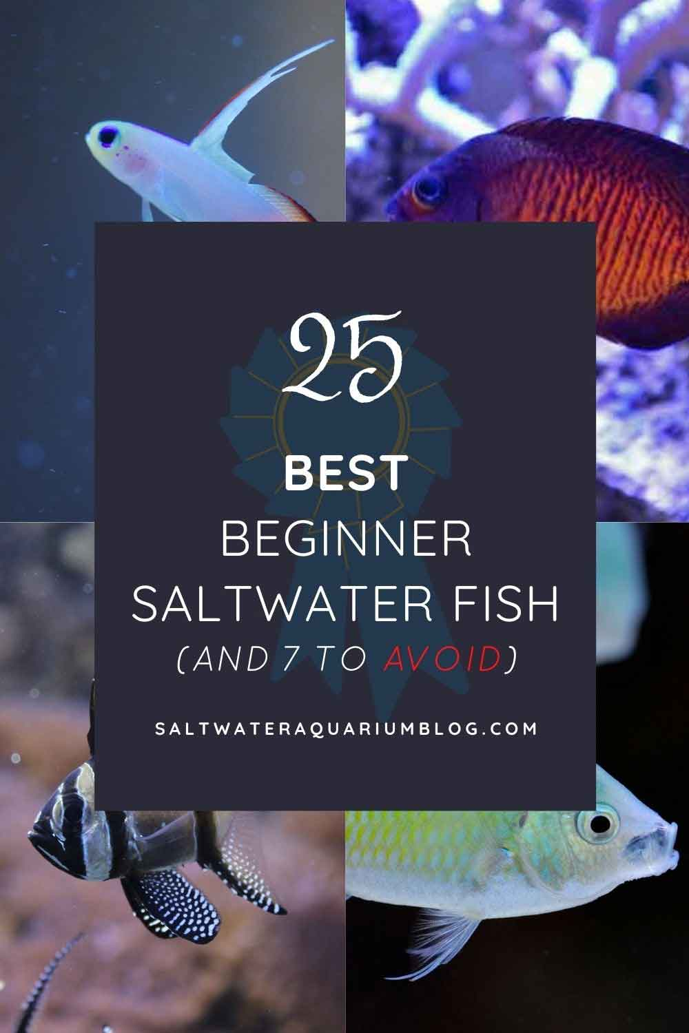 25 best beginner saltwater fish pinterest