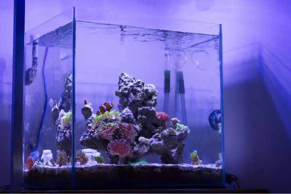 well ventilated nano reef tank
