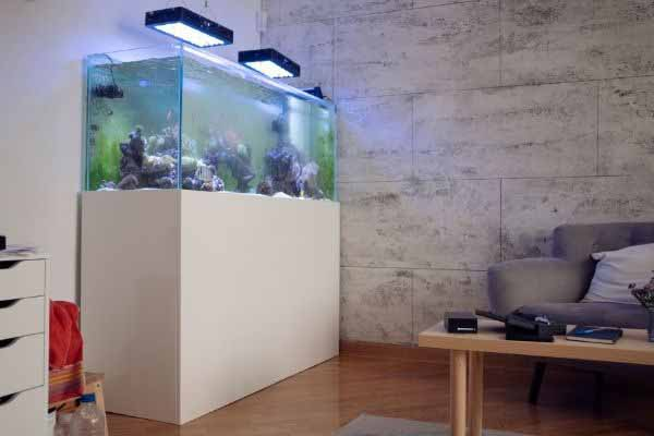 nice corner location for a new saltwater tank