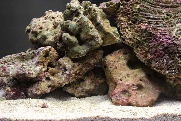 live rock in saltwater tank
