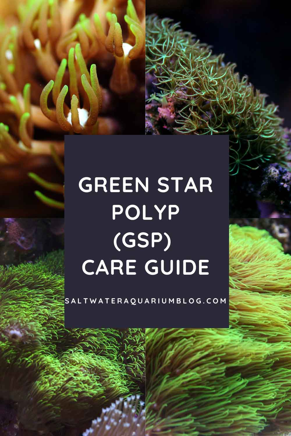 green star polyp GSP coral care guide pinterest pin
