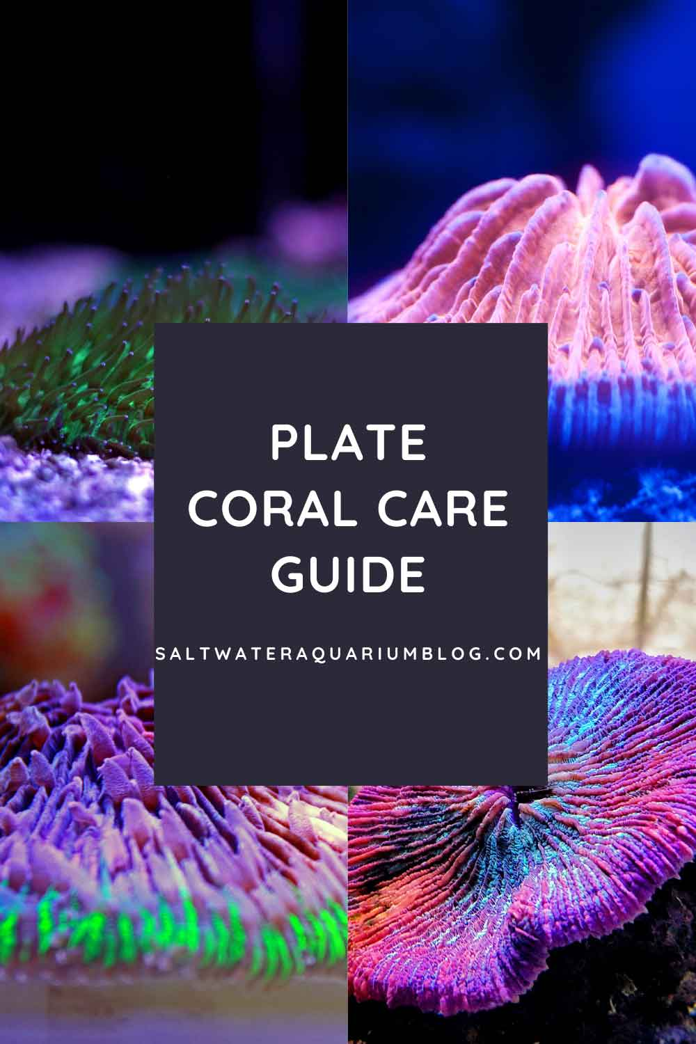 Plate coral care guide pinterest