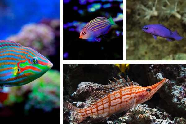 4 fish that eat bristle worms