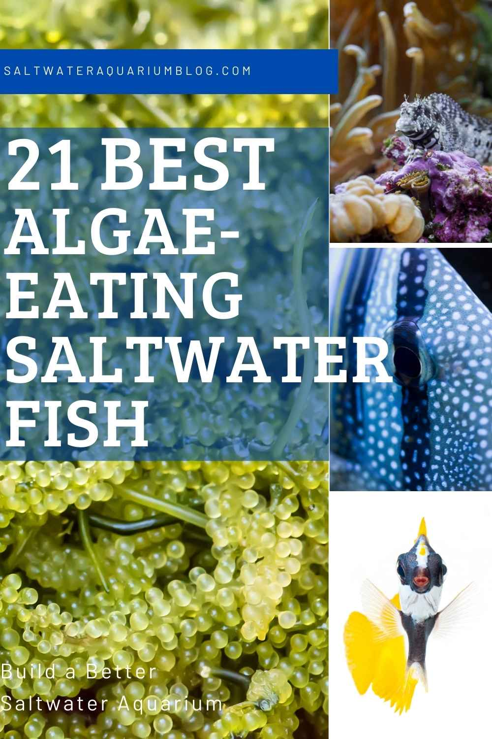 21 best algae eating saltwater fish image for pinterest