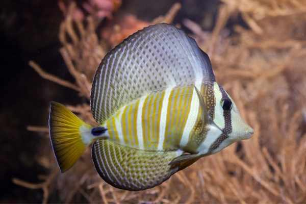 Without enough room, you can leave your sailfin feeling crowded